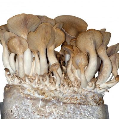 Mushroom Manufacturer Pune