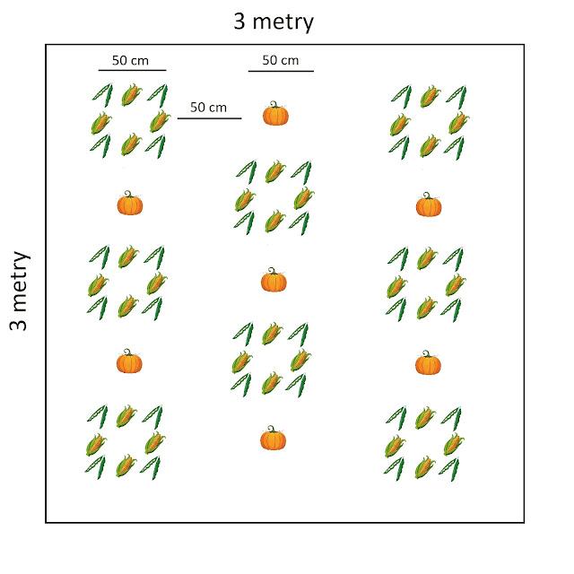 plan upraw w warzywniku dla trzech sióstr