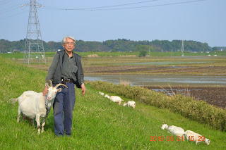 Fujioka-san and one of his goats, near Sakuragawa river, Tsukuba, Japan.