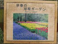 Perennial Spring carpet - Kyoto Botanical Gardens, Japan