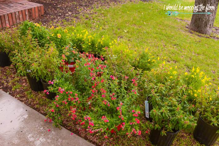 Southern Plants