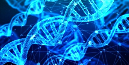 Personalized diet DNA diet  What is the DNA diet