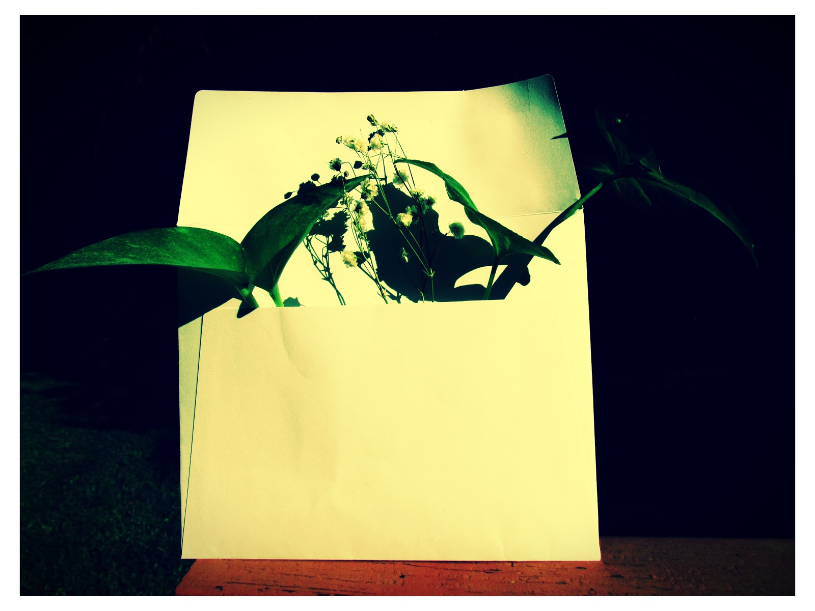 An white recycled envelope with green plants and baby's breath flowers inside