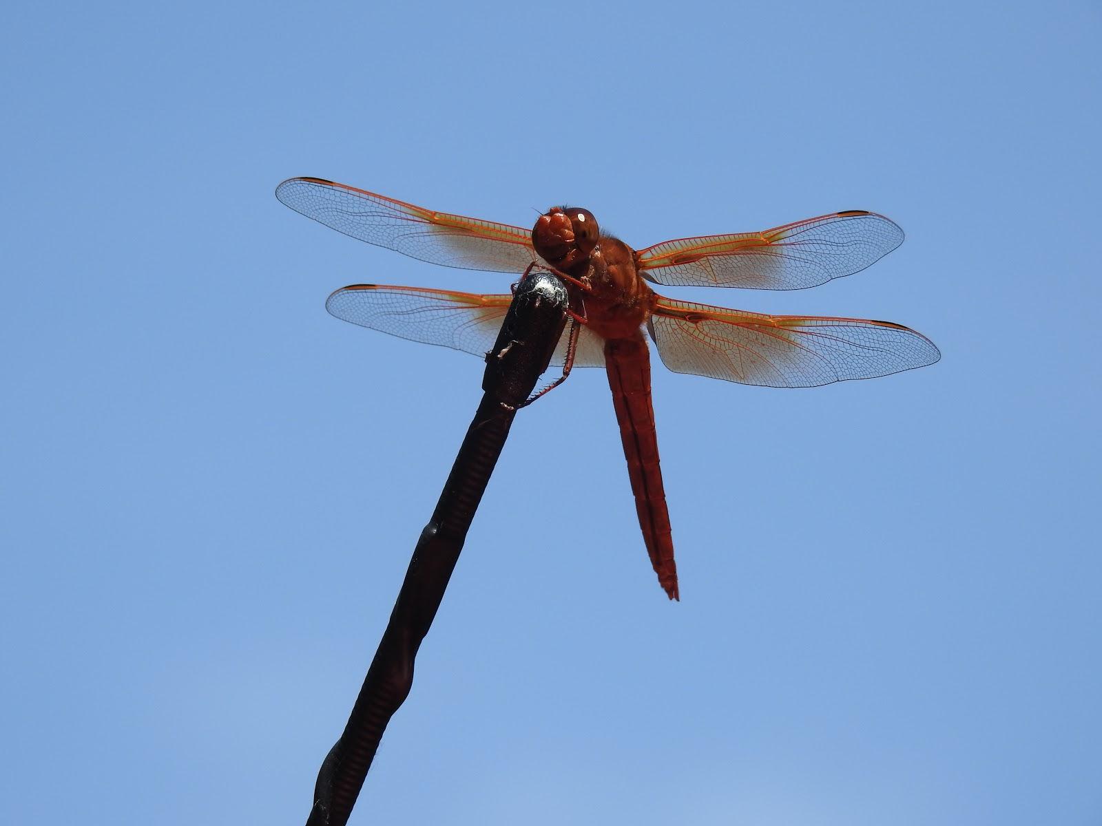 Broken Winged Crane Epub
