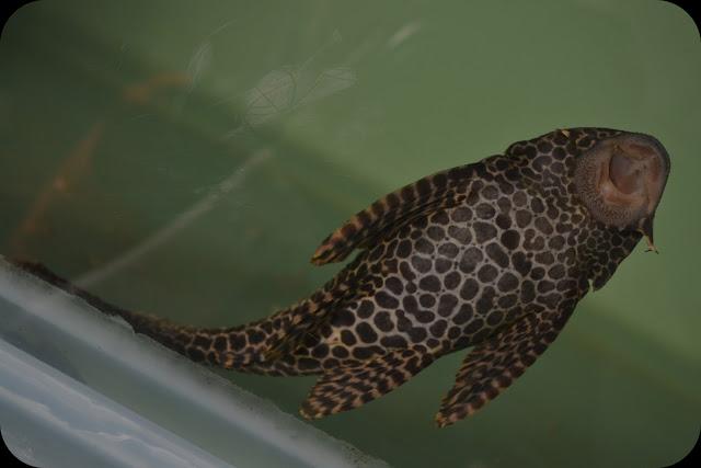 MY ALL: Ikan Bandaraya @ Ikan Cuci Cermin