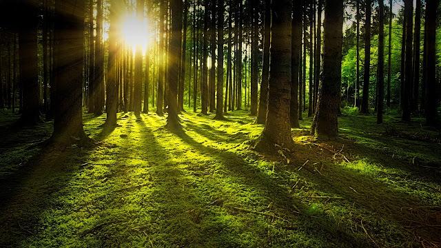 خلفيات غابات ومناظر خلابة