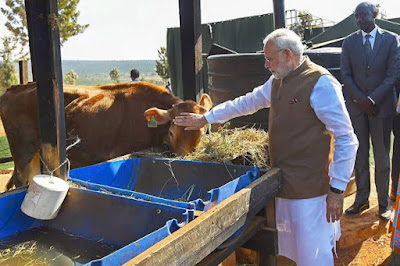 PM Modi to launch National Animal Disease Control Programme for Foot and Mouth Disease and Brucellosis