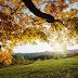 "NATURE- ""FROM A SAVIOUR TO A MENACE"""