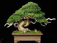 Kata Pengantar Wacana Tanaman Bonsai