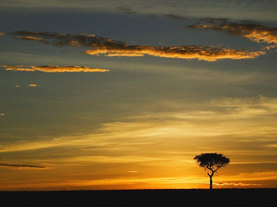 world_africa_single_acacia Nature HD Wallpapers