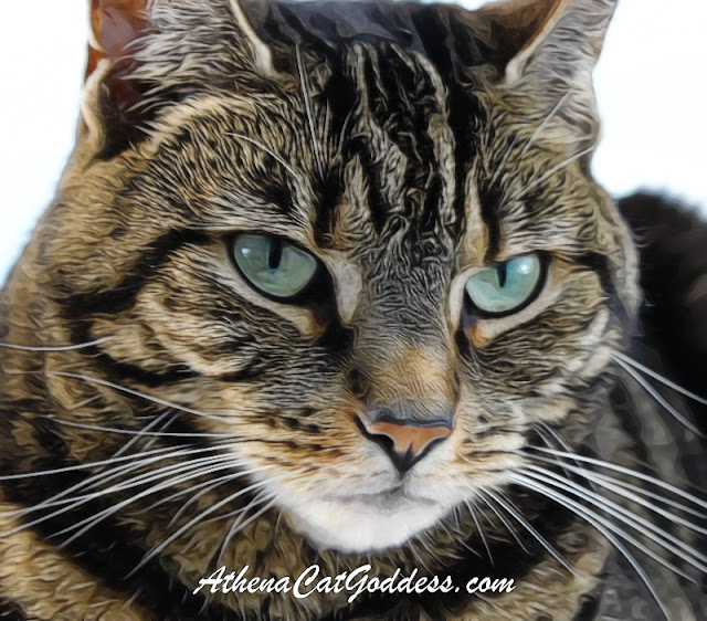 Tabby cat close-up
