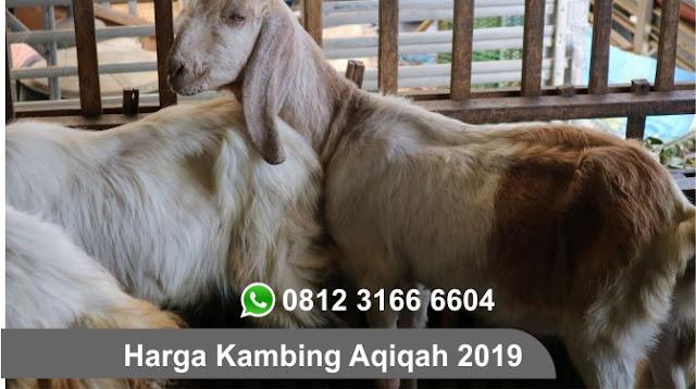 Kambing Aqiqah 2019 Surabaya, Sidoarjo, Gresik dan Seluruh Jawa Timur