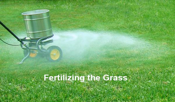 Fertilizing the Grass