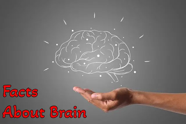 [100+] Interesting Unbelievable Facts About Human Brain In Hindi