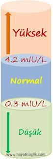 tsh normal değerleri