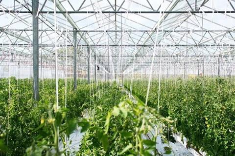 Budidaya sayuran hidroponik kita