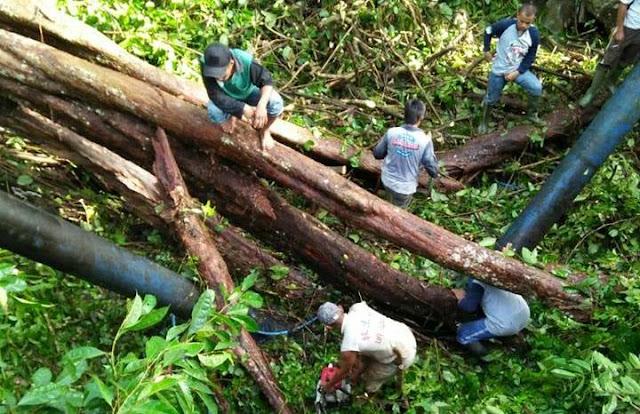 Pipa PAM Palopo Patah Tertimpa Pohon, Sekitar 10.000 Pelanggan Terganggu