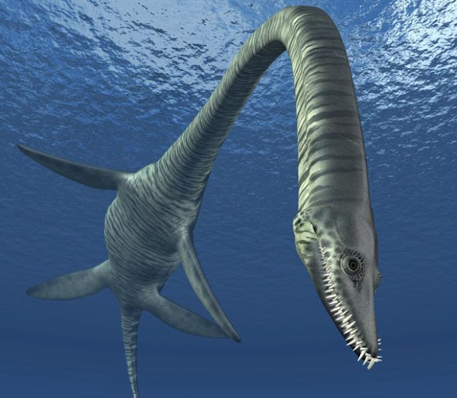Plesiosaur 'Eve' could be 'new species'