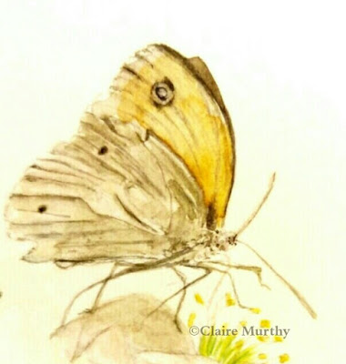British Wildlife watercolours, paintings of butterflies and local wildlife