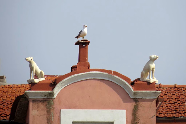Statues of dogs on a roof plus a gull, scali delle Cantine, Livorno