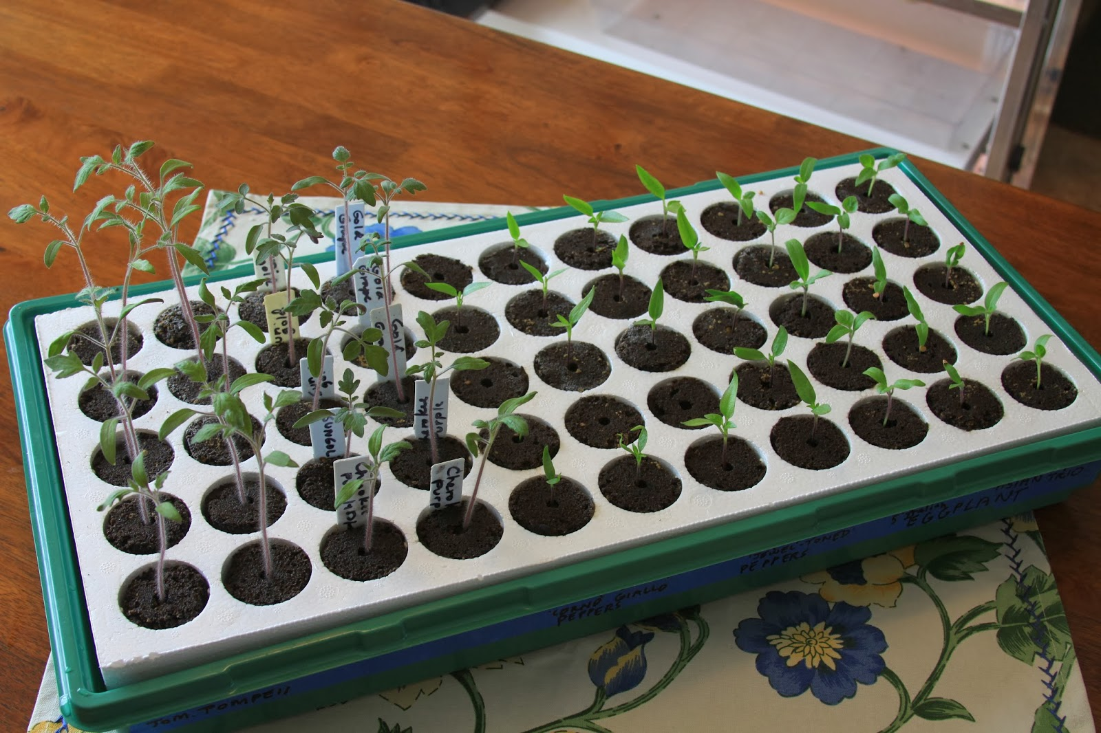 seed-starting kits, All-Roots