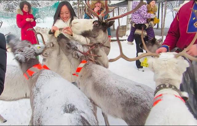 rusa arktik, Russia, Murmansk
