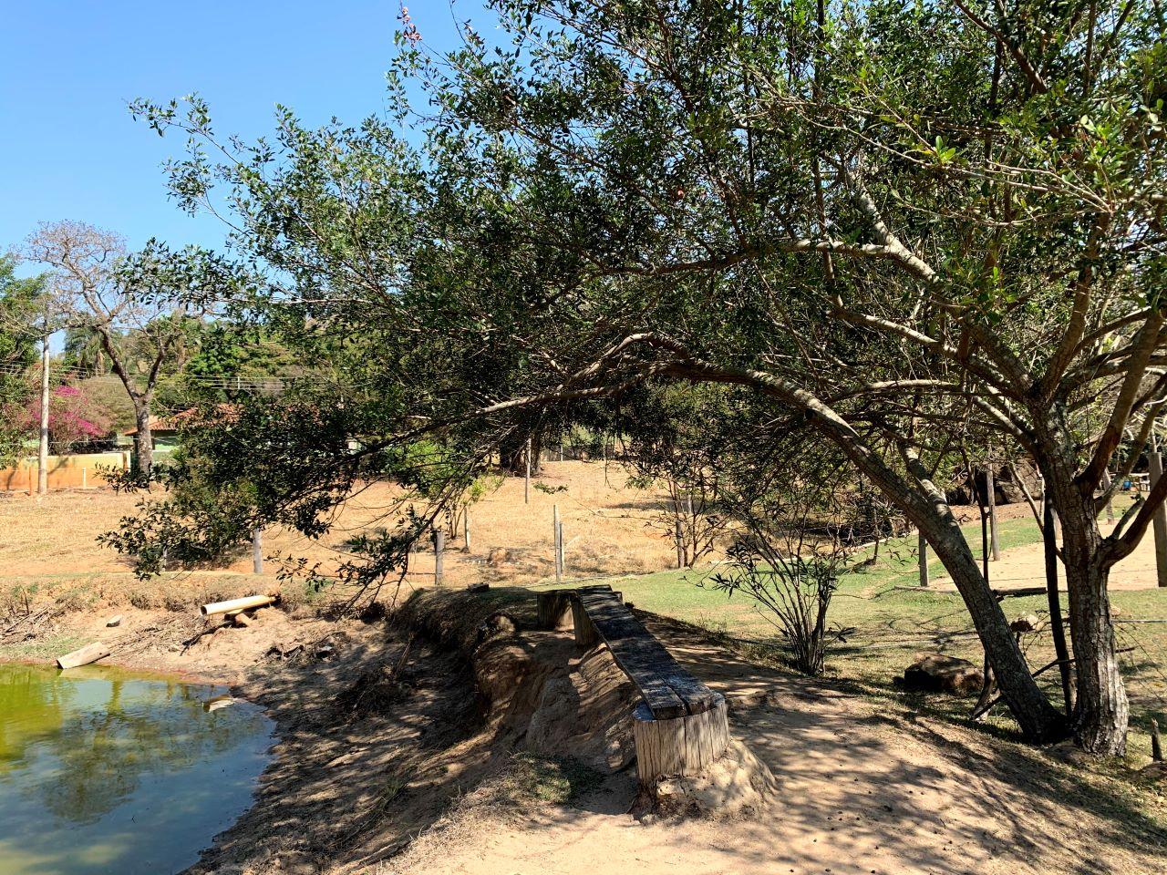 arvores e lago de uma fazenda