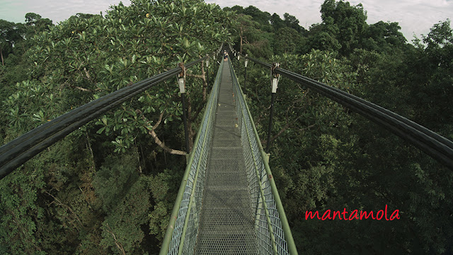 Tree Top Walk Singapore