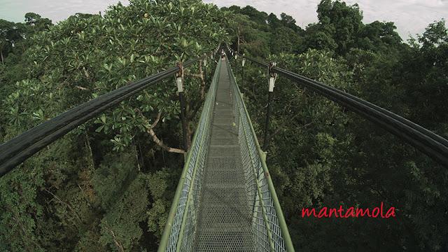 Tree Top Walk Singapore