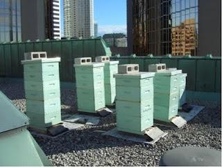 Bienenstöcke im Dachgarten des Royal York Hotels in Toronto