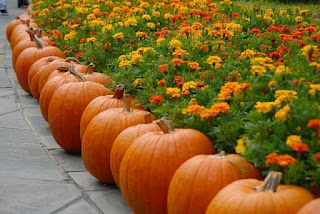 row of pumpkins next to flowers