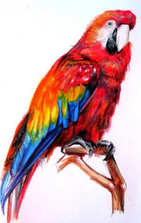 sketsa burung berwarna