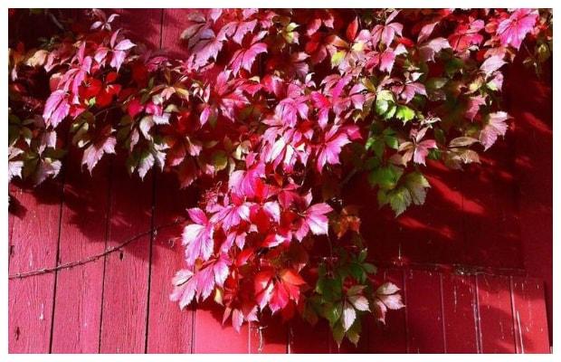 Πληροφορίες και Συμβουλές Κηπουρικής για την AΜΠΕΛΟΨΗ