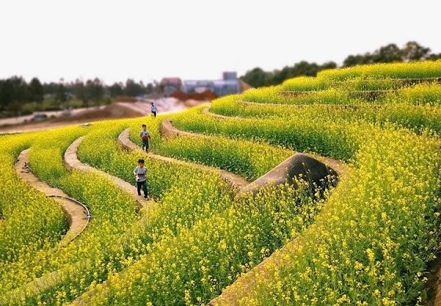 Explore The Rice Terraces Northwest In The Heart Of Hanoi 1