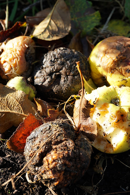 rotten apples - A Stubborn Optimist - an ecotherapy blog - C.Gault 2019