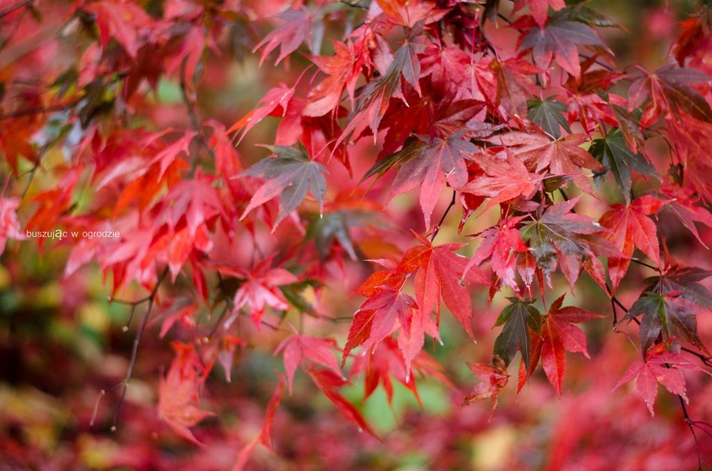 arboretum w Rogowie, jesień