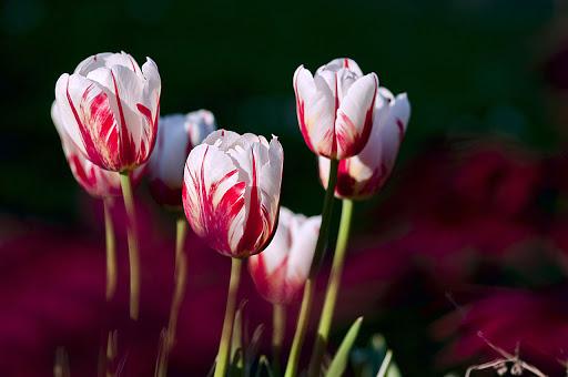 صور زهور ورق حائط 7