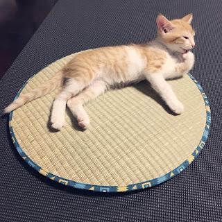 い草座布団 猫