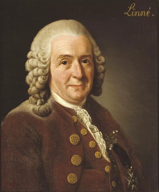 Carl Linnaeus - The Father of Taxonomy Biography