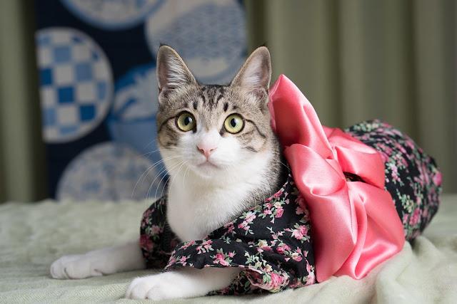 Asal Usul Kucing Jadi Hewan Istimewa bagi Masyarakat Jepang