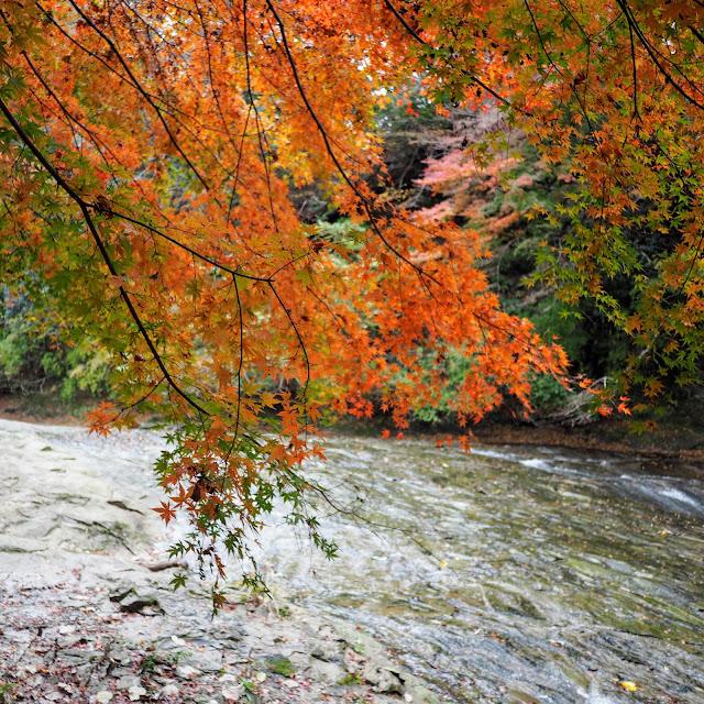 養老渓谷 栗又の滝 紅葉