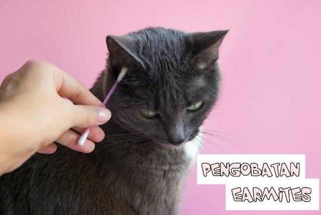 Pengobatan Kutu Telinga Kucing
