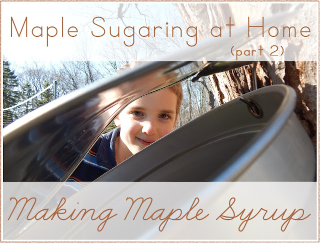 Maple Sugaring at Home: Making Maple Syrup