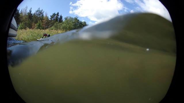 Kuva puoliksi samean veden alta, puoliksi päältä, näkyy SUP-lauta ja henkilö märkäpuvussa