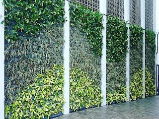 taman vertikal ? vertical garden surabaya jasataman co id