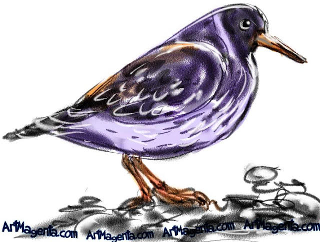 The Purple Sandpiper is a bird drawing by artist and illustrator Artmagenta
