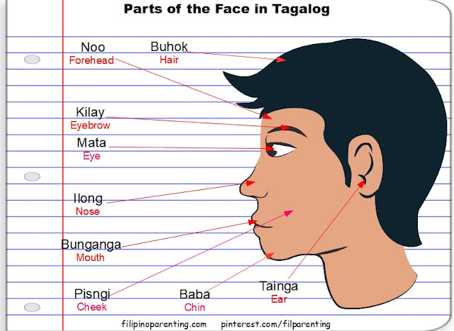 Parts of the Head and Face in Tagalog
