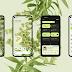Android 12-ն արդեն հասանելի է Pixel, OnePlus 9, Xiaomi Mi 11 և մի քանի այլ սմարթֆոնների համար