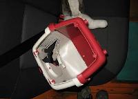 caixa de transporte de animais