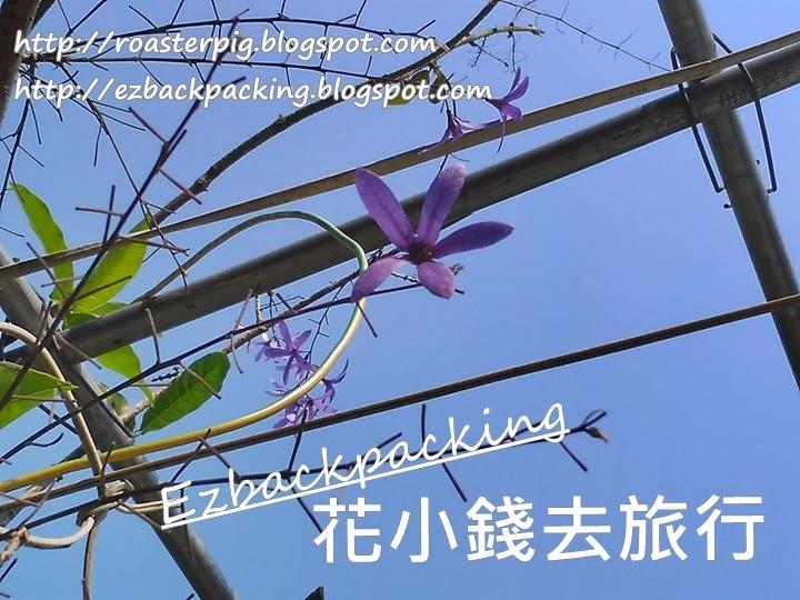 大埔藍花藤